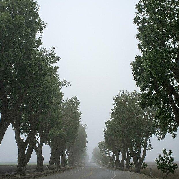 Bäume und Straße